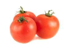Tres tomates rojos en un fondo blanco Fotos de archivo libres de regalías