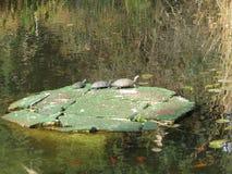Tres tortugas Fotos de archivo libres de regalías
