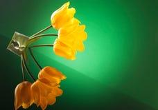 Tres tulipanes amarillos con la reflexión en una tabla Fotografía de archivo libre de regalías
