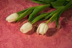Tres tulipanes blancos en un fondo rosado de Paisley Fotos de archivo