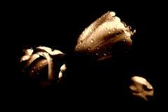 Tres tulipanes en la lluvia fotografía de archivo