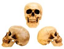 Tres vistas del cráneo humano Fotografía de archivo