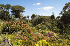 Tresco修道院庭院, Scilly小岛 库存图片