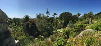 Tresco botanic garden, Scilly Islands, UK. Summer light over tropical trees in Tresco garden Royalty Free Stock Photos