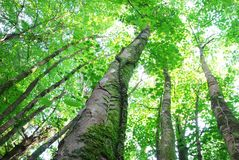 Treslothen有启发性的森林机盖 免版税库存照片