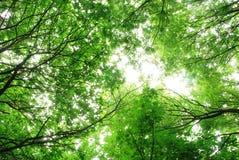 Treslothen有启发性的森林机盖 库存照片