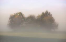 Tress в тумане Стоковое Изображение