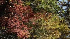 Tress падения с листьями цвета видеоматериал