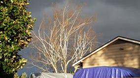 Tress против темного неба Стоковая Фотография RF