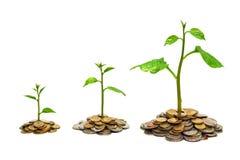 Tress растя на монетках стоковые изображения rf