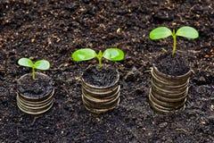 Tress растя на монетках стоковые изображения