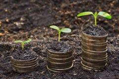 Tress растя на монетках стоковые фотографии rf