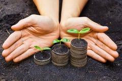 Tress растя на монетках стоковое изображение rf