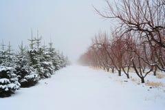 tress рождественских елок яблока Стоковые Изображения RF