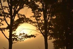 Tress с солнцем Стоковые Изображения