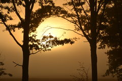 Tress с солнцем Стоковое Изображение