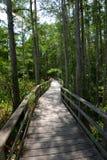 Путь через лес tress кипариса в Флориде Стоковые Изображения RF