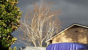 Tress against dark sky Royalty Free Stock Photography
