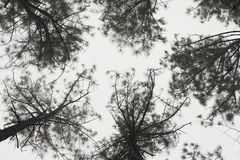 Tress against sky view from below Royalty Free Stock Photo