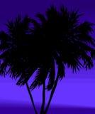 Tress della palma su priorità bassa blu Fotografia Stock