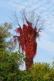 Tress di autunno Fotografia Stock Libera da Diritti
