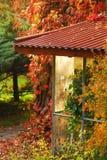 Tress di autunno Immagini Stock Libere da Diritti