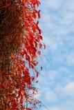 Tress di autunno Fotografia Stock