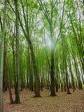 Tress In Forest Nursery In alta Kashmir Valley la India imagenes de archivo