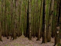 Tress In Forest Nursery In alta Kashmir Valley la India imagen de archivo libre de regalías