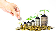 Tress growing on coins. Hand giving a coin to trees growing in a sequence of germination on piles of coins - csr - sustainable development - trees growing on Stock Images