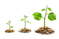 Tress growing on coins. Hands holding tress growing on coins / csr / sustainable development / economic growth royalty free stock photos
