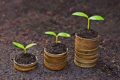 Tress growing on coins Royalty Free Stock Image