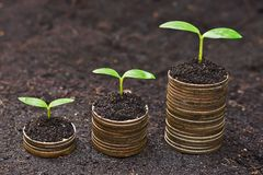 Tress growing on coins. Hands holding tress growing on coins / csr / sustainable development / economic growth royalty free stock photo