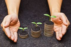 Tress growing on coins. Hands holding tress growing on coins / csr / sustainable development / economic growth royalty free stock images