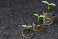 Tress growing on coins. Hands holding tress growing on coins / csr / sustainable development / economic growth stock photos