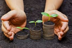 Tress growing on coins. Hands holding tress growing on coins / csr / sustainable development / economic growth stock photography