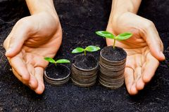 Tress growing on coins. Hands holding tress growing on coins / csr / sustainable development / economic growth stock images