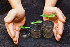 Tress growing on coins Royalty Free Stock Photo