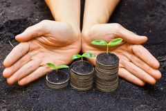 Tress growing on coins. Hands holding tress growing on coins / csr / sustainable development / economic growth royalty free stock image