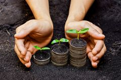 Tress growing on coins. Hands holding tress growing on coins / csr / sustainable development / economic growth Stock Photo