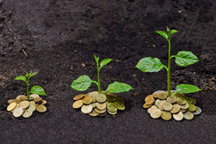Tress growing on coins Royalty Free Stock Photography