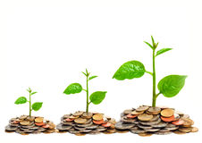 Tress growing on coins. Hands holding tress growing on coins / csr / sustainable development / economic growth royalty free stock photography