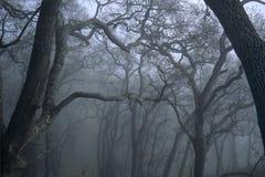 Tress in nebbia Fotografia Stock Libera da Diritti
