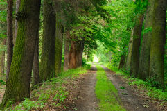Tress path Stock Image