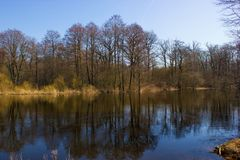Oak and alder wood with reflection in the water of the river. Tress and reflections. Oak and alder wood with reflection in the water of the river. Beautiful Royalty Free Stock Photo
