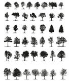 Tress Silhouette Vector Photos stock