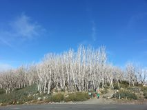 Tress At Top branca bonita da montanha azul, Melbourne fotografia de stock royalty free