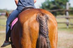 Tresse ou décoration d'un cheval de sa queue images libres de droits