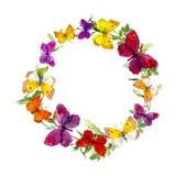 Tressez le cadre de frontière avec des papillons, herbes, fleurs de pré watercolor Photographie stock