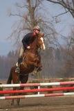 Vista delantera del salto del caballo Imagenes de archivo
